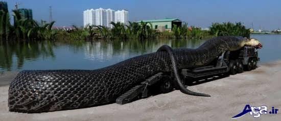 تصاویر جالب انواع مارهای بزرگ