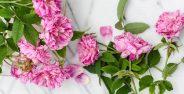 خواص گل محمدی