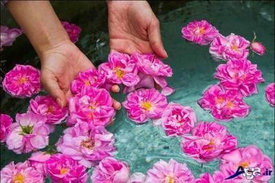 گل محمدی برای پوست