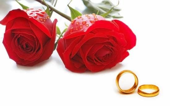 عکس گل رز بسیار زیبا