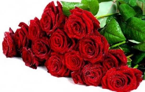 دسته گل رز برای پروفایل