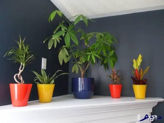 تزیین خانه با گل طبیعی