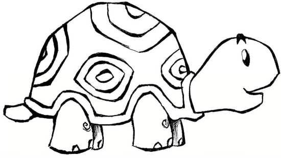 نقاشی های زیبا و متنوع لاک پشت