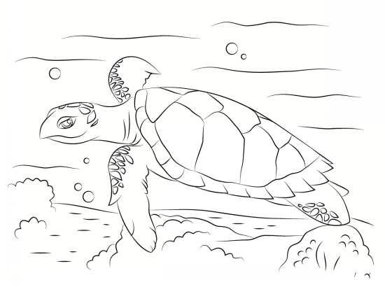 نقاشی زیبا لاک پشت در دریا