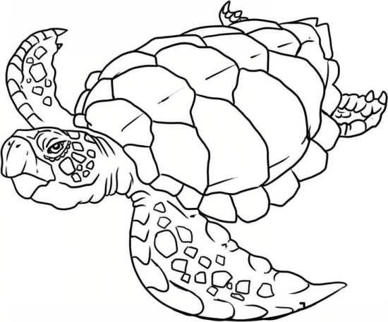 نقاشی لاک پشت زیبا