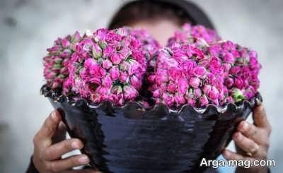 خاصیت گل محمدی