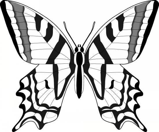 طرح پروانه برای ویترای