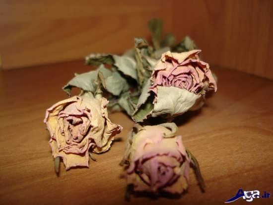 گل های زیبای پژمرده