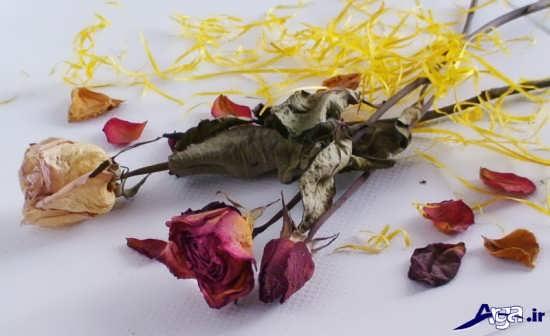 گل های زیبا و جذاب پژمرده