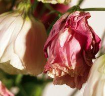 عکس گل پژمرده انواع گونه های مختلف گل