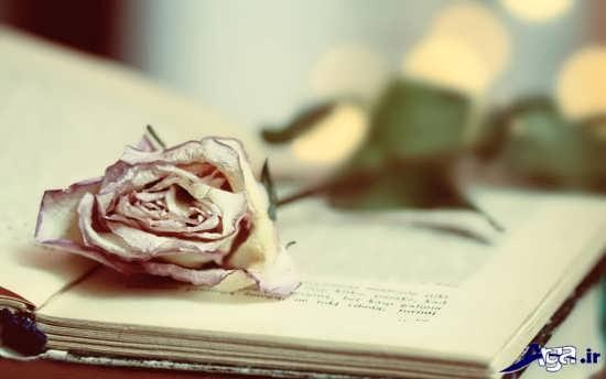 عکس گل های زیبا و جذاب پژمرده