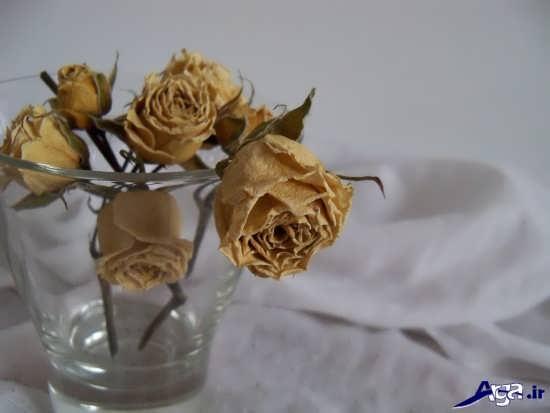 تصاویر گل پژمرده و زیبا