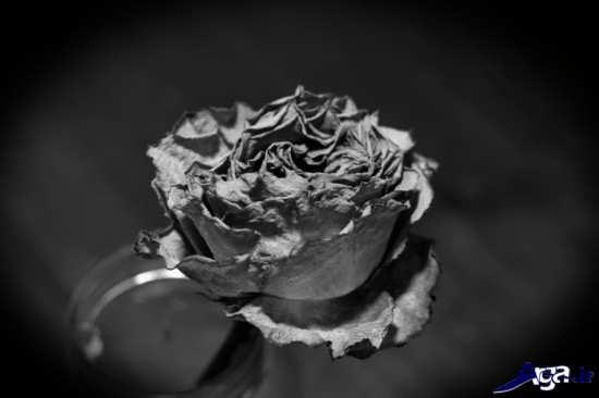 تصویر گل پژمرده زیبا