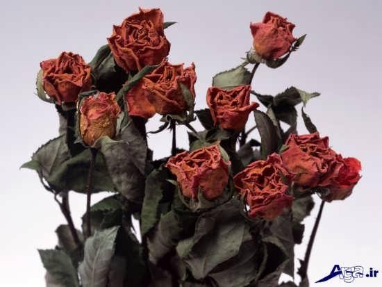 عکس گل های پژمرده