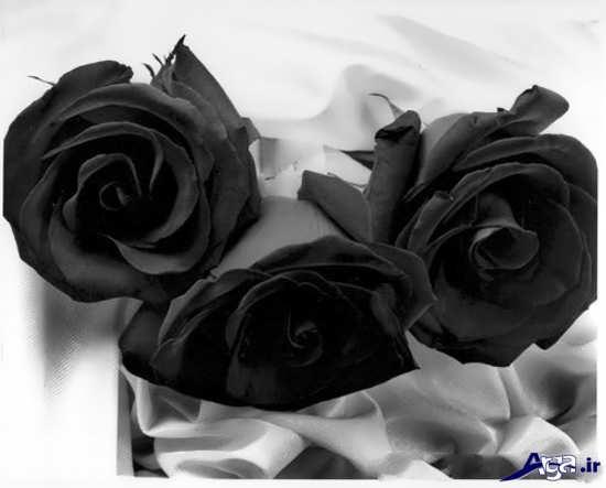 عکس دسته گل های زیبای رز سیاه