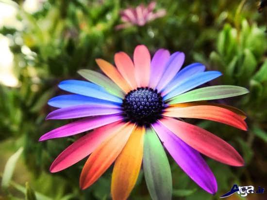 گل های بسیار خاص و زیبای طبیعت