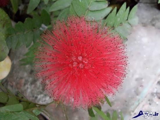 گل های عجیب و زیبای طبیعت