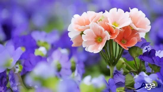 گل های بسیار جذاب و زیبا