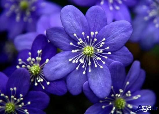 تصاویر گل های بسیار زیبا و جذاب
