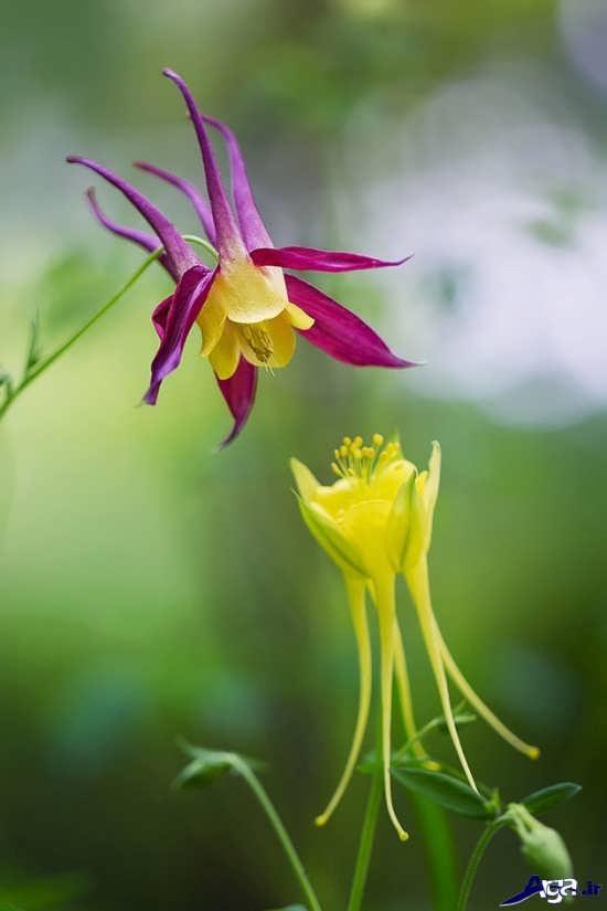 گل های طبیعی بسیار زیبای دنیا