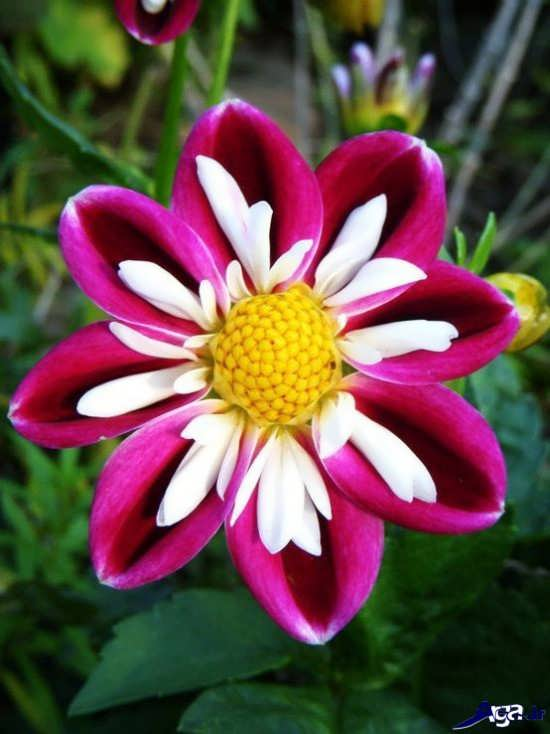 تصاویر گل های شگفت انگیز دنیا