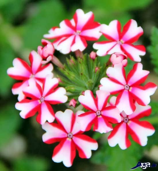 گل های بسیار زیبا و جذاب
