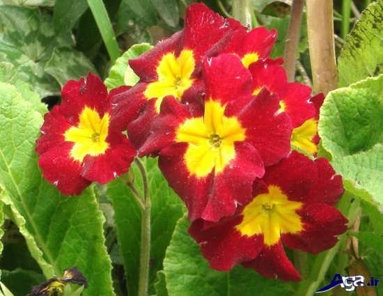 عکس گل های قشنگ و رنگارنگ
