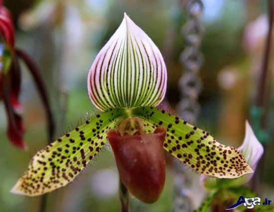 گل های زیبا و عجیب طبیعت