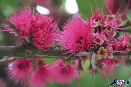 عکس گل های قشنگ و جالب