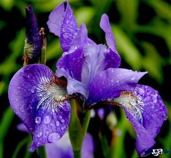 گل های بسیار زیبا و جذاب دنیا