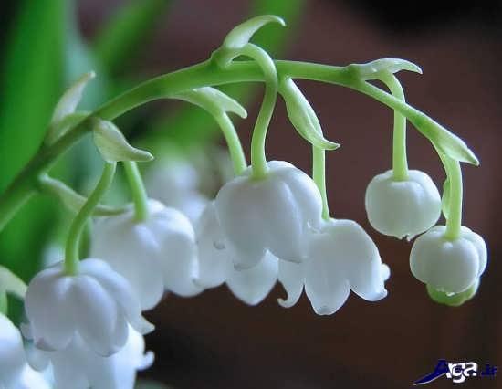 گل های زیبای سراسر دنیا