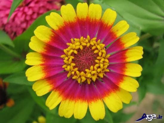 عکس گل های قشنگ و زیبا
