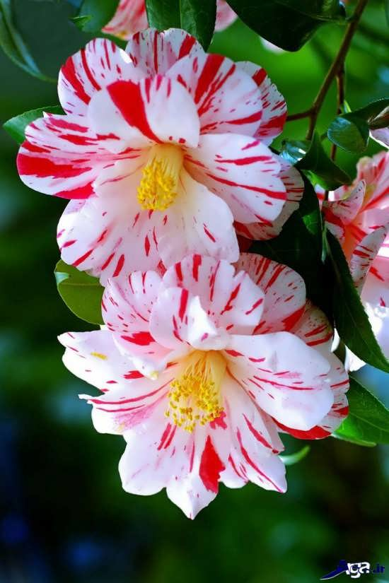 گل های بسیار زیبای طبیعت