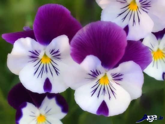 عکس گل های بسیار جذاب