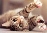 عکس حیوانات زیبا برای پروفایل