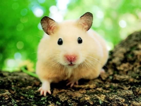 تصاویر بسیار زیبای حیوانات ناز