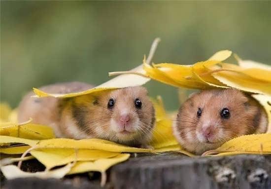 تصاویر بسیار زیبای حیوانات