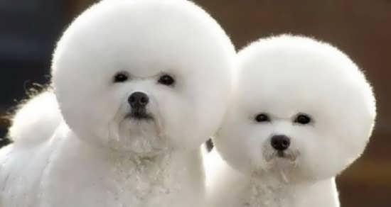 عکس حیوانات زیبا و جذاب