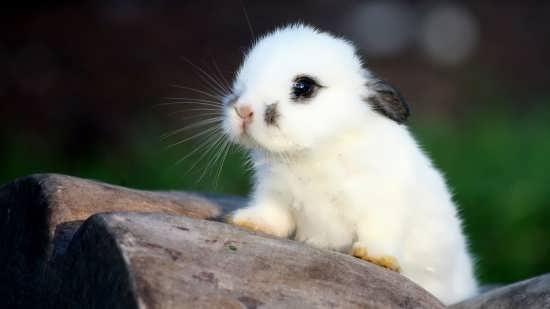 تصاویر حیوانات زیبا و جذاب