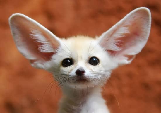 عکس انواع حیوانات بانمک و زیبا