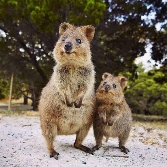 عکس حیوانات زیبا و بامزه