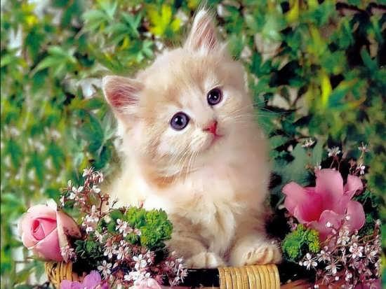 تصاویر حیوانات زیبا و ناز