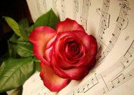 عکس پروفایل گل برای شبکه های اجتماعی