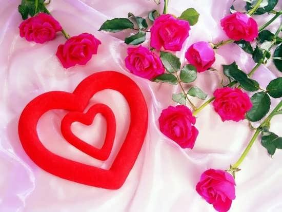 تصاویر گل های زیبا و خاص