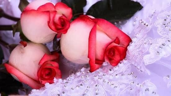 عکس پروفایل گل زیبا و جذاب