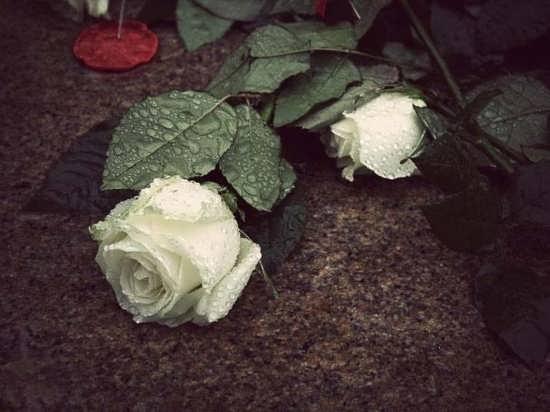 مجموعه دیدنی گل های زیبا و جذاب