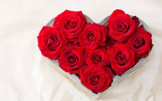 تصاویر گل های زیبا برای پروفایل