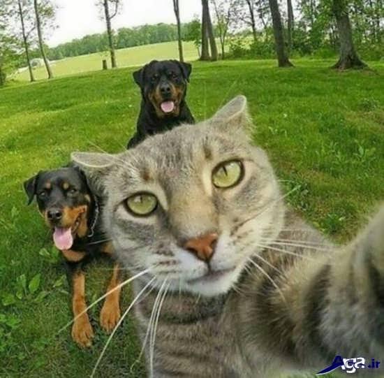 تصویر خنده دار سلفی حیوانات