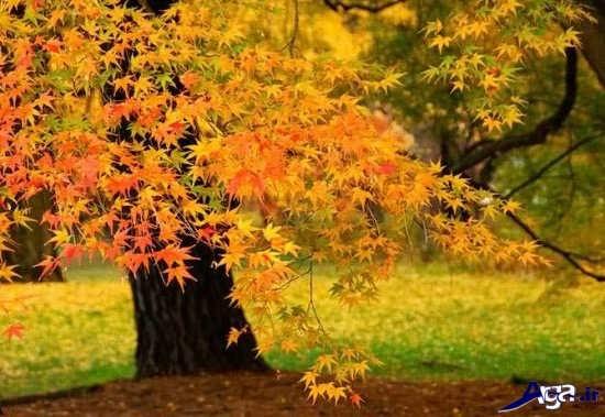 مناظر زیبای پاییزی