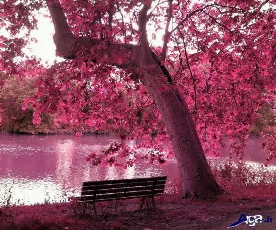 عکس های زیبا و جالب طبیعت